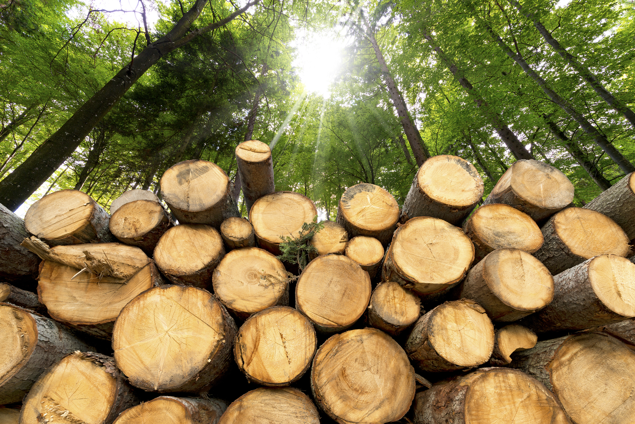 Lumber: The Most Profitable Future Business Worldwide?